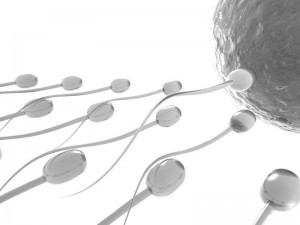 Enhancing-Food-Quality-and-Quantity-of-Sperm