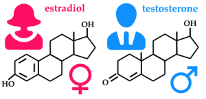 Estrogen-and-Testosterone
