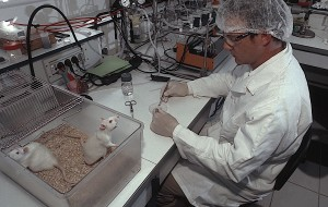 lab-rats-bred-crop