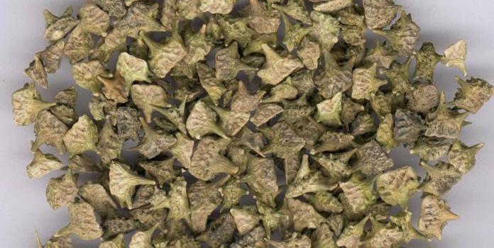 Dried tribulus terrestris flower heads