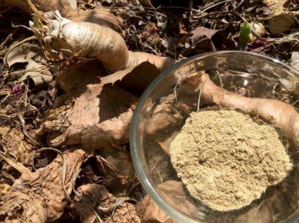 mondia white powder