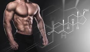 testosterone  immunity
